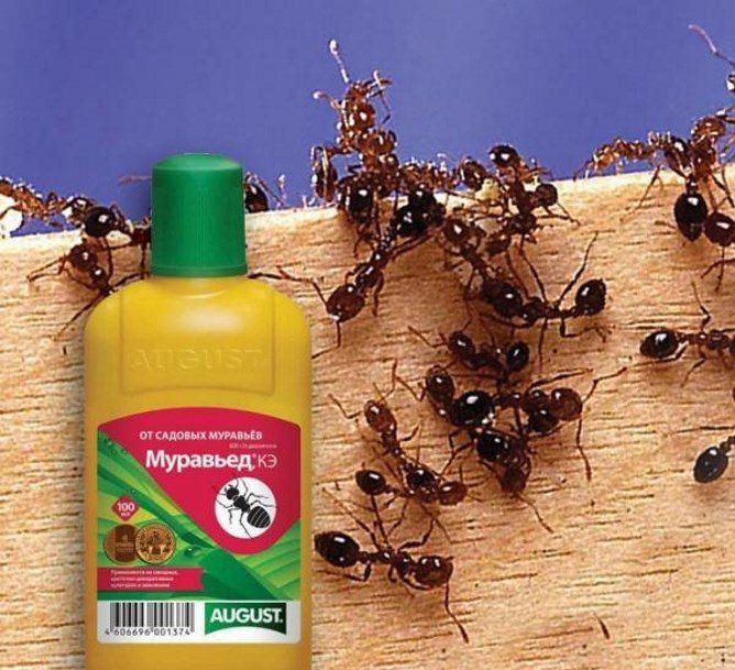 Муравьед и муравьи