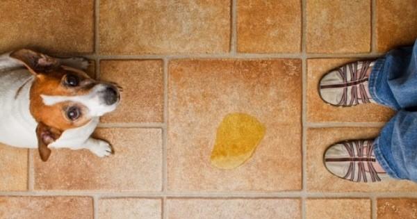 Как избавится от запаха собачьей мочи