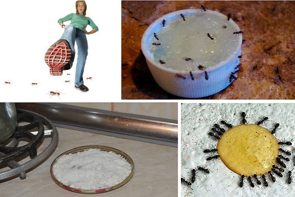 Борьба с муравьями