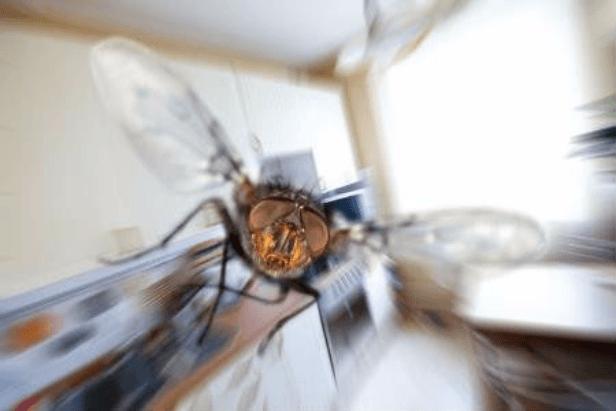 Муха в квартире