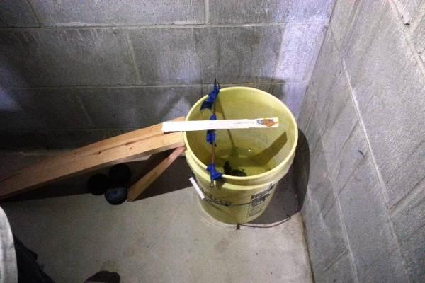 Мышеловка ведро с водой