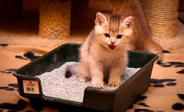 Профилактика и уход за котом