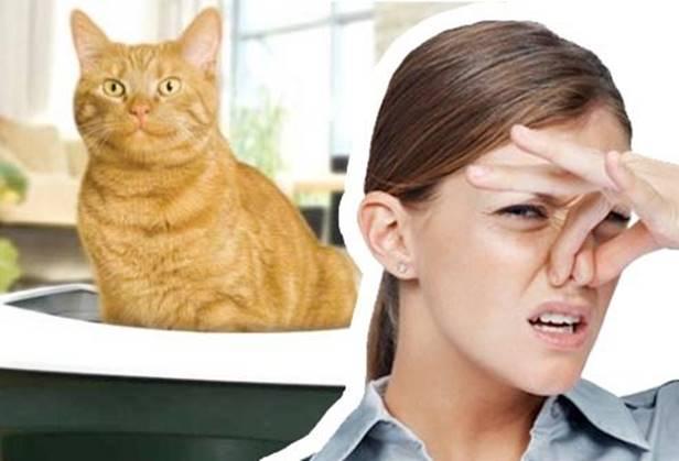 Как избавится от неприятного запаха домашних животных