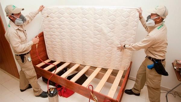 Дезинсекция кровати